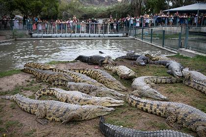 В Израиле испугались международного конфликта из-за крокодилов