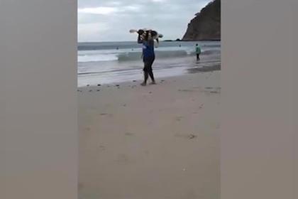 Похищение морской черепахи на пляже попало на видео
