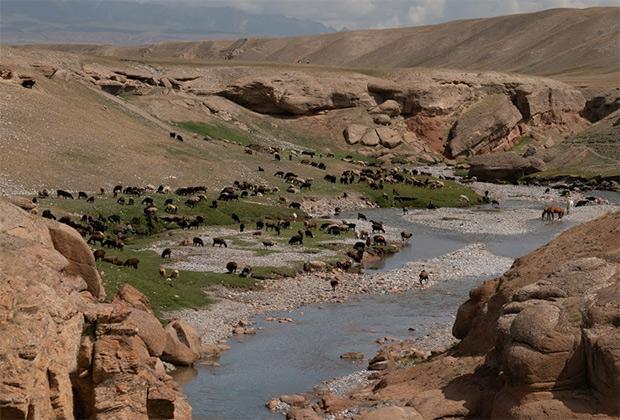 Поголовье скота в Кыргызстане растет каждый год, но кажется, что эти луга способны дать пищу и впятеро большему числу яков, коров, лошадей и баранов.