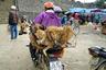 Вьетнамцы употребляют собак в пищу и этого не скрывают. Местные выращивают этих животных специально для того, чтобы потом приготовить из них какое-нибудь блюдо. Вьетнамцы считают: если отобедал псом— в жизни обязательно будет удача.
