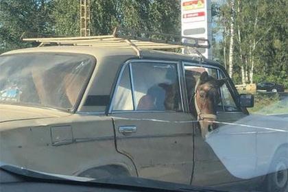 В московской машине заметили коня