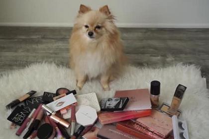 Блогеры заставили животных выбирать им косметику