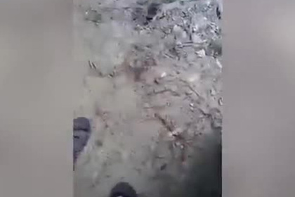Индиец погладил крокодила по голове и чуть не лишился руки