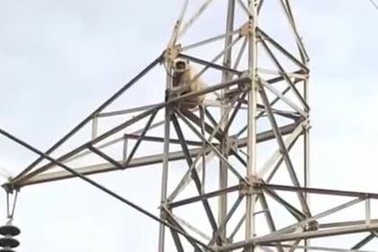 Свободолюбивая обезьяна спрыгнула с 50-метровой вышки и выжила