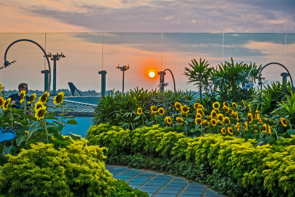 Sunflower Garden inside of the Singapore Changi Airport