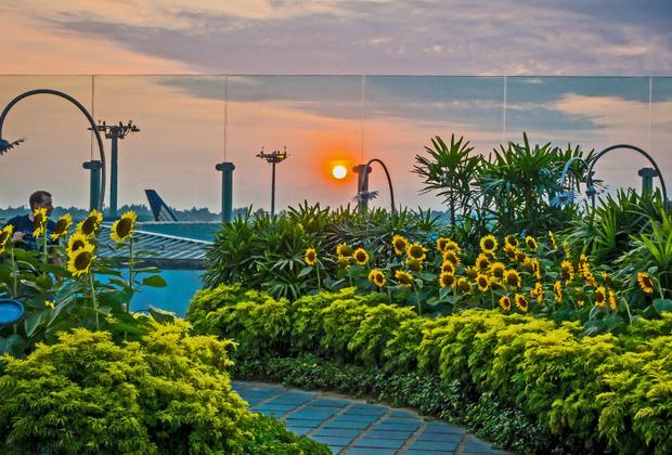 Сингапурцы позаботились даже о тех, кто тоскует по Ростовской области и Краснодарскому краю: на крыше одного терминала находится подсолнуховое поле.