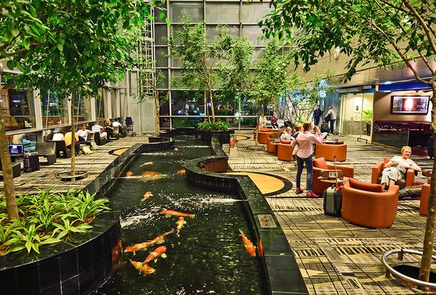 В терминалах много живых растений, а в некоторых расположены полноценные ботанические сады.