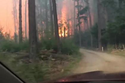 Туристы попали в сердце бушующего пожара и сняли репортаж «из ада»