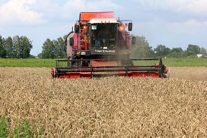 Свыше 260 тысяч тонн зерновых культур убрали в Подмосковье