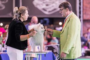 Елена Булыгина показывает собаку породы японский шпиц судье из Финляндии Кари Ярвинену.