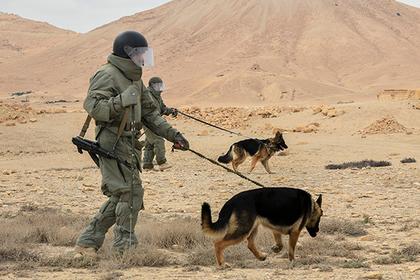 Минобороны Российской Федерации отчиталось овоенной операции вСирии