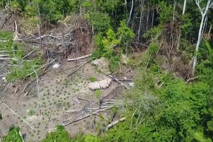Изолированное племя из джунглей впервые попало на видео