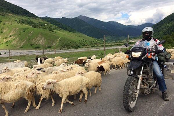 В горах часто можно встретить стада овец, которые не дают проехать ни на каком транспорте