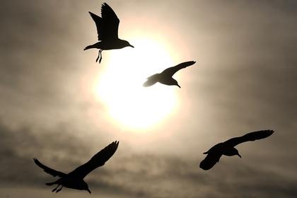 Крупная птица пробила крыло самолета с российскими курортниками
