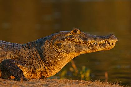 Нелегальные мигранты затерялись в кишащем крокодилами лесу