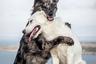 У собак Бэмби и Бирча есть собственная страница в Instagram. На публикуемых там фотографиях неразлучные друзья резвятся на фоне живописных пейзажей Ньюфаундленда — скалистого острова у побережья Канады. «Порой все, что нужно, — это объятия друга», — подписал автор этот снимок.
