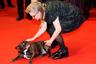 """<p>В 2012 году актриса Кэрри Фишер, которая играла принцессу Лейю в «Звездных войнах», купила французского бульдога по кличке Гэри. Она страдала биполярным расстройством и надеялась, что собака поможет с ним бороться. «Такого примерного пса у меня никогда не было, и я его даже не учила, — говорила Фишер. — Он умеет """"давать пять"""". И сидит, как Уинстон Черчилль».   <p>Актриса не расставалась с Гэри до самой смерти и брала его с собой на телевизионные интервью, помпезные премьеры и съемочные площадки. Однажды он и сам снялся в кино — бульдог изображает инопланетное животное на планете-казино Канто-Байт в фильме «Последние джедаи». Это, конечно, не такая важная роль, как у пиренейской горной собаки, которая играет Белль в «Белль и Себастьян: Друзья навек», но не всем же быть звездами."""
