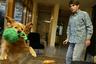 <p>Золотистый ретривер по кличке Трикси оказался одним из источников вдохновения писателя Дина Кунца, который опубликовал десятки бестселлеров с суммарным тиражом 450 миллионов. Трикси была служебной собакой и училась помогать инвалидам, но судьба свела ее с писателем. В 2004 году благотворительная организация, где дрессировали пса, решила подарить ее Кунцу в знак благодарности за щедрые пожертвования.   <p>Подобно Белль из «Белль и Себастьян: Друзья навек», которая задолго до фильма была героем книг французской писательницы Сесиль Обри, Трикси стала книжным персонажем. Питомец побудил писателя написать историю про женщину, спасенную золотистым ретривером, которого она взяла из приюта. А после смерти Трикси Дин Кунц издал воспоминания о ее жизни.