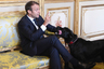 Собаки есть у многих государственных деятелей. Французский лидер Эммануэль Макрон часто приводит в Елисейский дворец своего лабрадора-ретривера Немо, которого взял из приюта для животных. Собака президента России Владимира Путина однажды напугала Ангелу Меркель. При Бараке Обаме в Белом доме жили португальские водные собаки Бо и Санни. Джордж Буш-младший держал целый зверинец с тремя собаками, котом и длиннорогой коровой по имени Офелия. У Билла Клинтона был лабрадор-ретривер Бадди и кот Сокс. Дональд Трамп — редкое исключение: у него нет ни одного питомца.