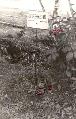 В разломе сучка этого куста был найден источник излучения