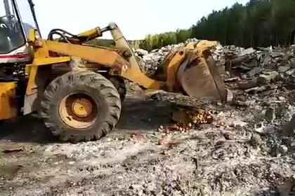 ФСБ провела спецоперацию по уничтожению яблок