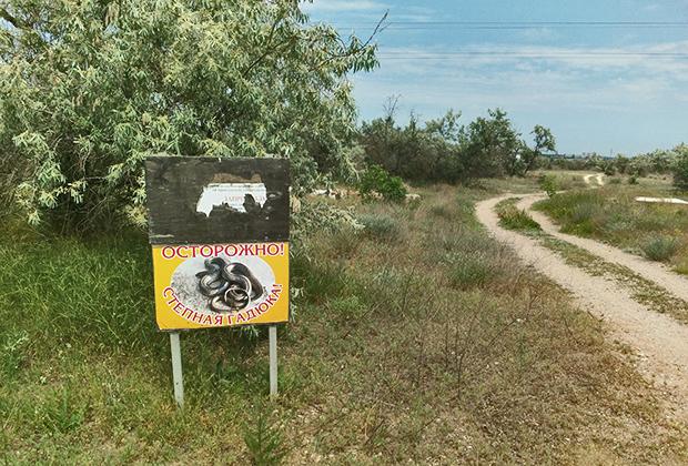 В степях рядом с Черным морем «порадовала» табличка «Осторожно! Степная гадюка».