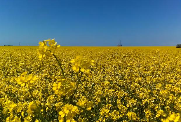 Бескрайние цветущие поля Крыма.