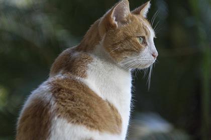 Толстый кот упал с балкона и отправил итальянца в больницу
