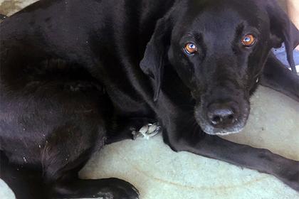 Собака спасла американца от 50 лет тюрьмы