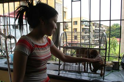 Во Вьетнаме попросили граждан не есть собак