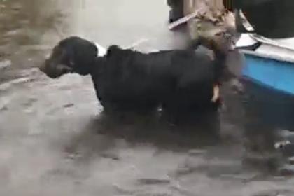 Репортер прервала прямой эфир ради спасения раненой собаки