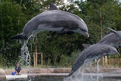 Умер самый старый дельфин в неволе