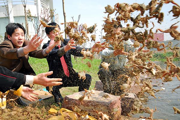 Россия накормит китайцев лягушками