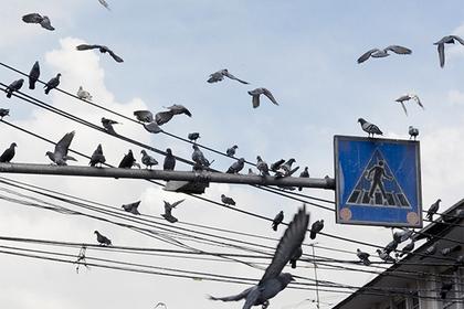 Любителей кормить голубей объявят вне закона