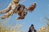 Кокер-спаниель Долли наблюдает за прыжками знакомой собаки Джини, поодаль — золотистый ретривер Эльза. Лиз Грегг— хозяйка Эльзы и Джини— регулярно публикует в Instagram фотографии своих питомцев.