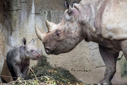 Носорог укусил туриста за палец