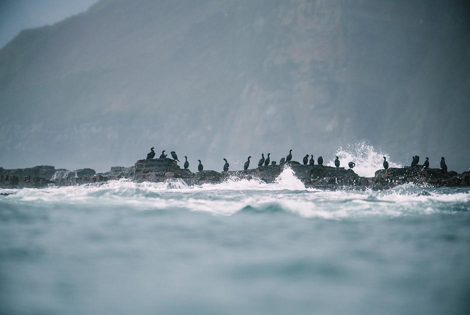 Бакланы на скалах южной части острова Беринга