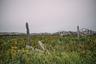 В советские времена на острове был госпромхоз, где выращивали пушных животных на мех. Сейчас былое хозяйство пребывает в запустении, навесы для клеток почти разрушены.