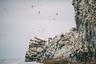 Арий Камень — четвертый по величине остров Командорского архипелага, 53-метровая скала в 6,3 километра к западу от острова Беринга. На острове окружностью около 1 километра нет пресной воды, но его облюбовало множество пернатых. Кроме бакланов, там обитают чайки, кайры, ипатки, чистики, моевки, буревестники и другие виды птиц.