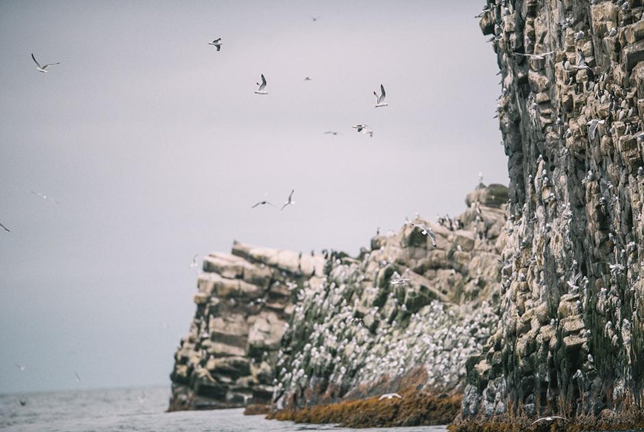 Птичий базар на острове Арий Камень