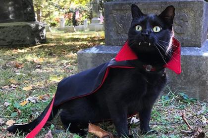 Черный кот с вампирскими клыками стал звездой сети