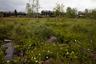 Поселок Усть-Поча долгое время был местным центром заготовки и сплава леса. Для рабочих и построены дома барачного типа.