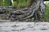 Кенозеро окружено дремучей тайгой. Возраст некоторых деревьев достигает 300 лет.