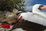 Когда земляные вьюрки с Галапагосских островов не могут прокормиться, они превращаются в вампиров. Безобидные на первый взгляд пернатые клюют олуш и других крупных птиц, а потом сосут их кровь. Те не хотят бросать гнезда и смиренно терпят. Особого вреда им от вьюрков нет.