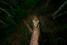 Фотограф Алехандро Прието нашел дерево со следами когтей в горах Сьерра-де-Вальехо на западе Мексики. Он знал, что таким образом ягуары обозначают границы своей территории. У фотографа родился план: дождаться возвращения зверя, который каждый год обходит границы, чтобы поставить новые отметины. Прието установил фотоаппарат в шести метрах от ствола и набрался терпения. Самодельный спусковой механизм сработал через восемь месяцев — и принес  фотографу кадр, который не стыдно отправить на конкурс.
