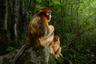 Голландский фотограф Марсель ван Устен получил главный приз конкурса за снимок с парой рокселлановых ринопитеков из Китая, которые греются на солнце. «Это в определенном смысле очень традиционный кадр — портрет. Но какой же поразительный, и что за волшебные животные! — объясняет выбор глава жюри Роз Кидман Кокс. — Это произведение искусства, заслуживающее места в любой галерее мира».