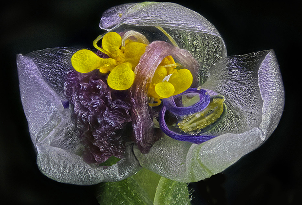 Увядший цветок. Йехуд, Израиль.