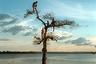 29 марта 2014 года. Группа мальчиков забирается на дерево на реке Сину в городе Алтамира (штат Пара, Бразилия). Основные районы города постоянно затапливает из-за строительства близлежащего комплекса ГЭС Белу-Монти. Поэтому более 20 тысяч человек были вынуждены переселиться. Стройка оказала влияние на многочисленные коренные и речные общины в регионе.   <br> <br>  Белу-Монти является четвертой по величине ГЭС в мире, но при этом считается одной из наименее эффективных в истории Бразилии. Ее начали строить в 1975 году — во время пика военной диктатуры в стране. В 1989 году племя воинов Каяпо, опасаясь за сохранность реки Амазонки, развернуло массовую общественную кампанию против строительства ГЭС. Иностранные инвесторы вскоре прекратили свою поддержку, и проект был отложен до начала 21 века.