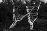 Согласно японским религиозным убеждениям, веревки и узлы символизируют связь между людьми и божественным началом. Вдохновленная образами Нобуеси Араки и их смесью грубого насилия и красоты, фотограф Анна Реивилла изучает отношения между человеком и природой, обращаясь к японским традициям.  <br> <br>  Девушка ищет места, где элементы природы объединяются, чтобы создать интересную «естественную напряженность», и продолжает этот симбиоз через собственные интерпретации, расширяя, оборачивая и вытягивая эти коренные формы. По словам фотографа, она создает новое ощущение объема из уже существующих компонентов.