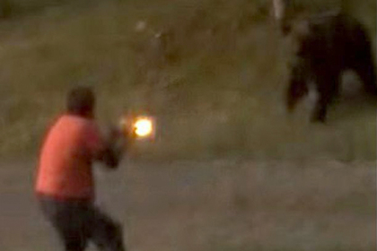 Гризли бросился на канадца и продолжил погоню после выстрела в упор